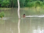 Flood-2016